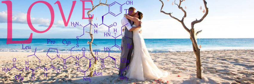 love on the beach oxytocin overlay banner chemical structure of love