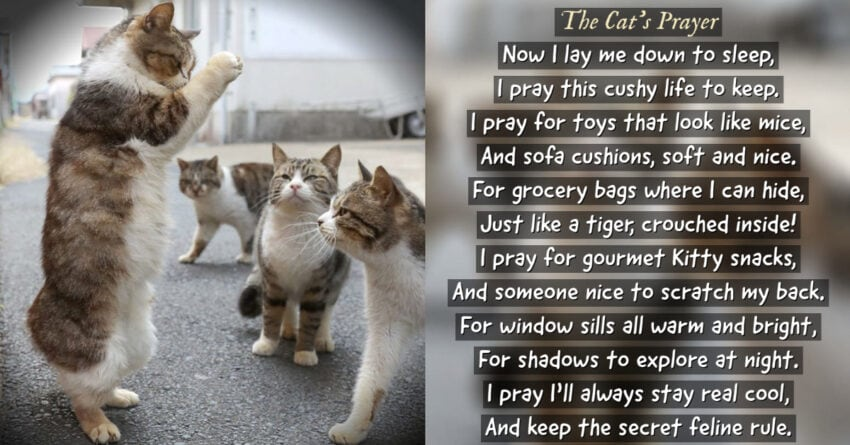 a cat's prayer